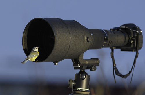 Bird Sitting On A Long Lens Camera