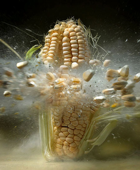 High-Speed Still Photography of an Exploding Ear of Corn