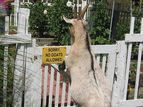 No Goats Allowed Sign