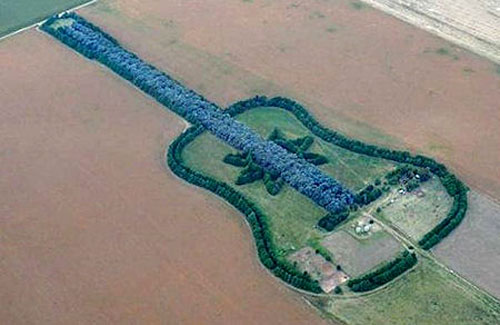 Guitar Tree Farm
