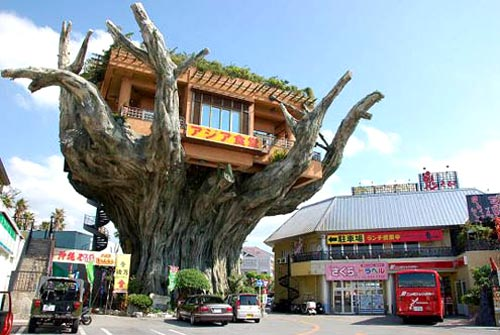 Naha Harbor Treehouse Restaurant in Okinawa, Japan